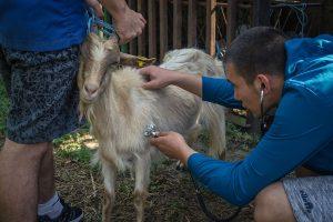 В пазарджишката гимназия от години подготвят ветеринарни техници